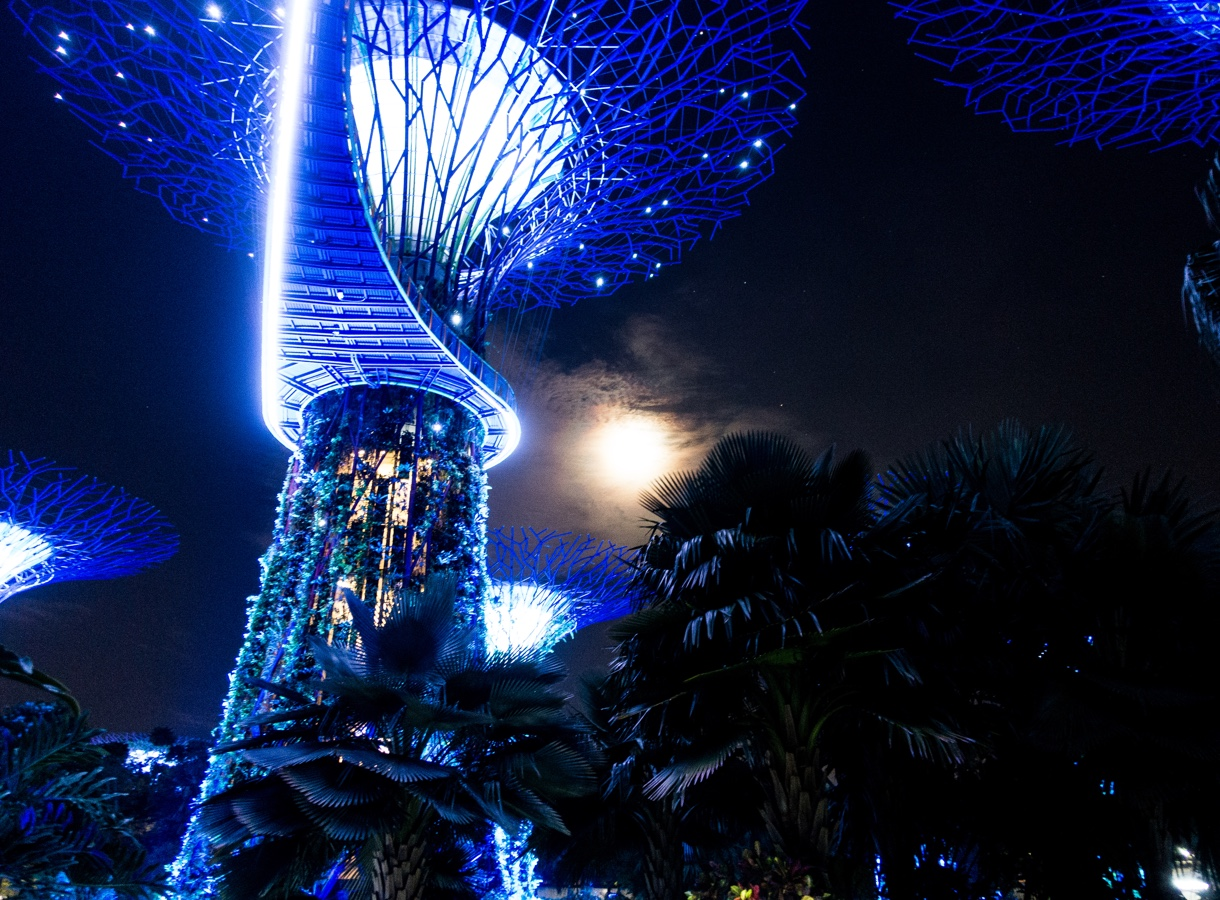 Supertree Grove — Singapore